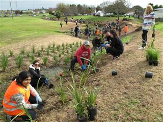 A great turn out of volunteers to plant Pakuranga stream