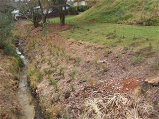 Wai Care Planting at Keri Downs Park in Papakura